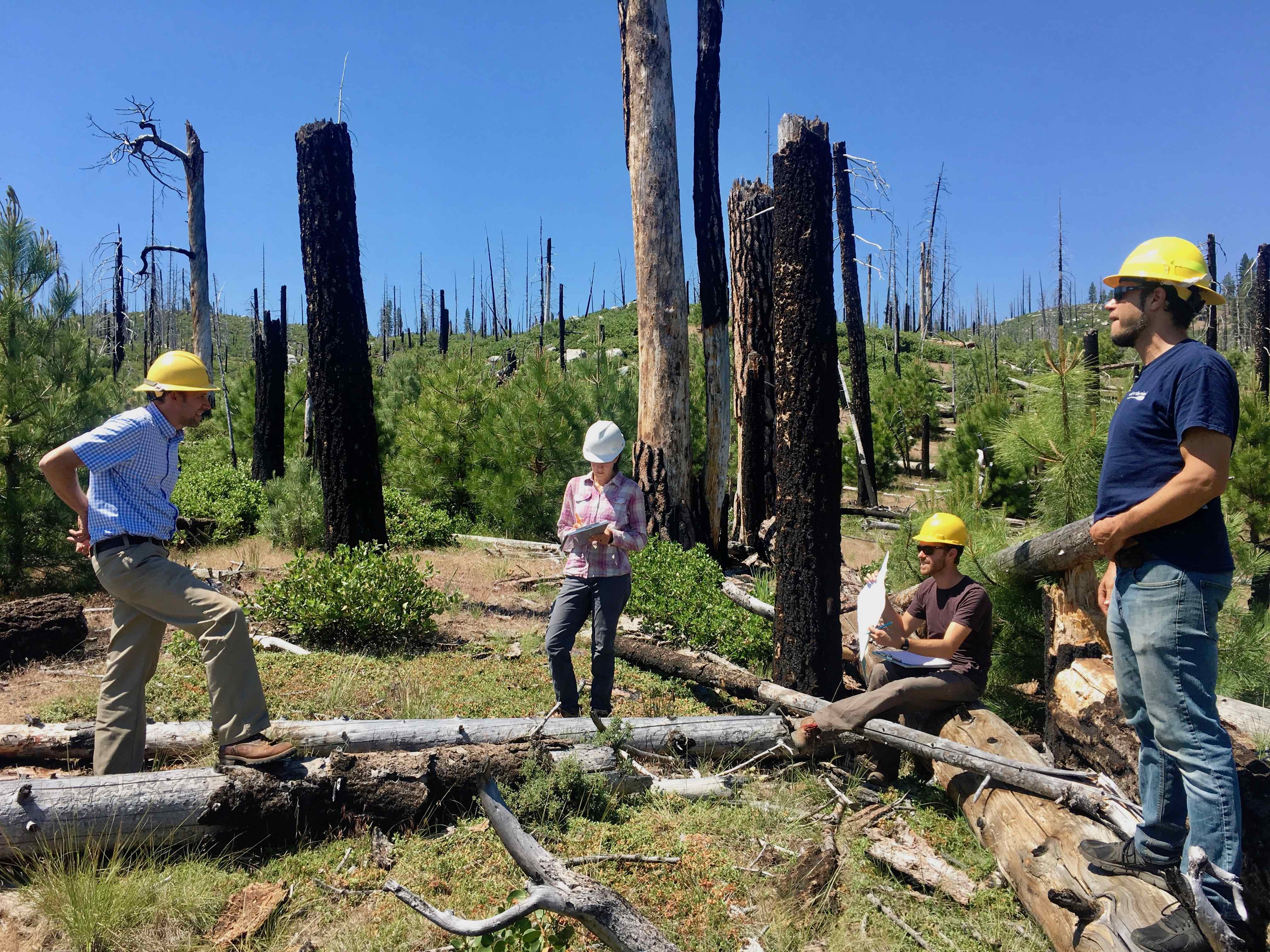 Discussing postfire tree regen with forest service