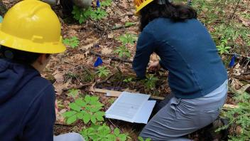 seedling study in Harvard Forest
